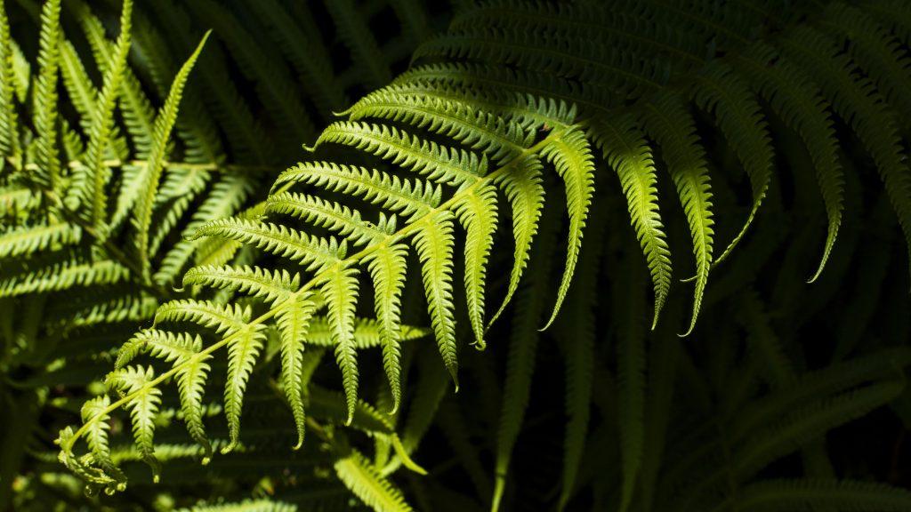 PLANTA HELECHO EN LA COCINA